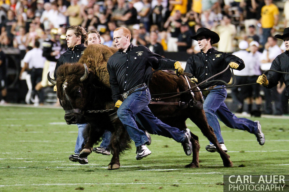 September 7th, 2013 - Ralphie the Buffalo takes to the field prior to the start of second half action in the NCAA football game between the University of Central Arkansas Bears and the University of Colorado Buffaloes at Folsom Field in Boulder, CO