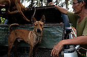East Malaysia : Wild Boar Hunting