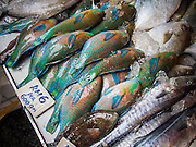 06 OCTOBER 2014 - GEORGE TOWN, PENANG, MALAYSIA: Parrot Fish for sale as food in a market in George Town (also Georgetown), the capital of the state of Penang in Malaysia. Named after Britain's King George III, George Town is located on the north-east corner of Penang Island. The inner city has a population of 720,202 and the metropolitan area known as George Town Conurbation which consists of Penang Island, Seberang Prai, Kulim and Sungai Petani has a combined population of 2,292,394, making it the second largest metropolitan area in Malaysia. The inner city of George Town is a UNESCO World Heritage Site and one of the most popular international tourist destinations in Malaysia.      PHOTO BY JACK KURTZ
