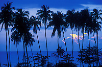 Blue sunset with palm trees.