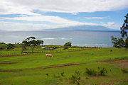 Kainalu Ranch. Molokai, Hawaii