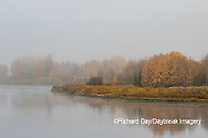 67545-09402 Fall color and fog along the Snake River near Oxbow Bend,  Grand Teton National Park, WY