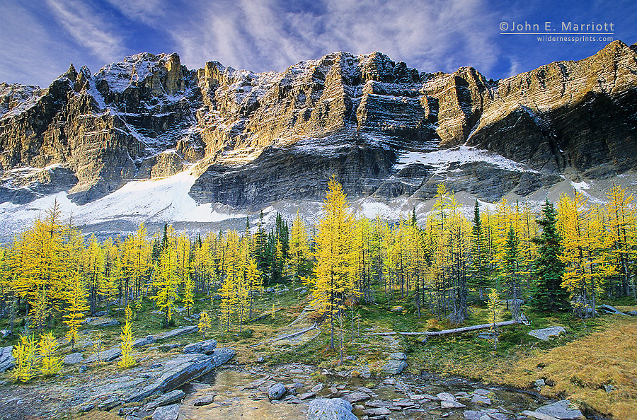 Mt Schaffer and autumn larches, Lake O'Hara region, Yoho National Park, BC, Canada