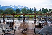A crow stands on the rain-soaked verandah at Dornan's bar and pizza restaurant, Moose Junction, Grand Teton National Park, Wyoming, USA.