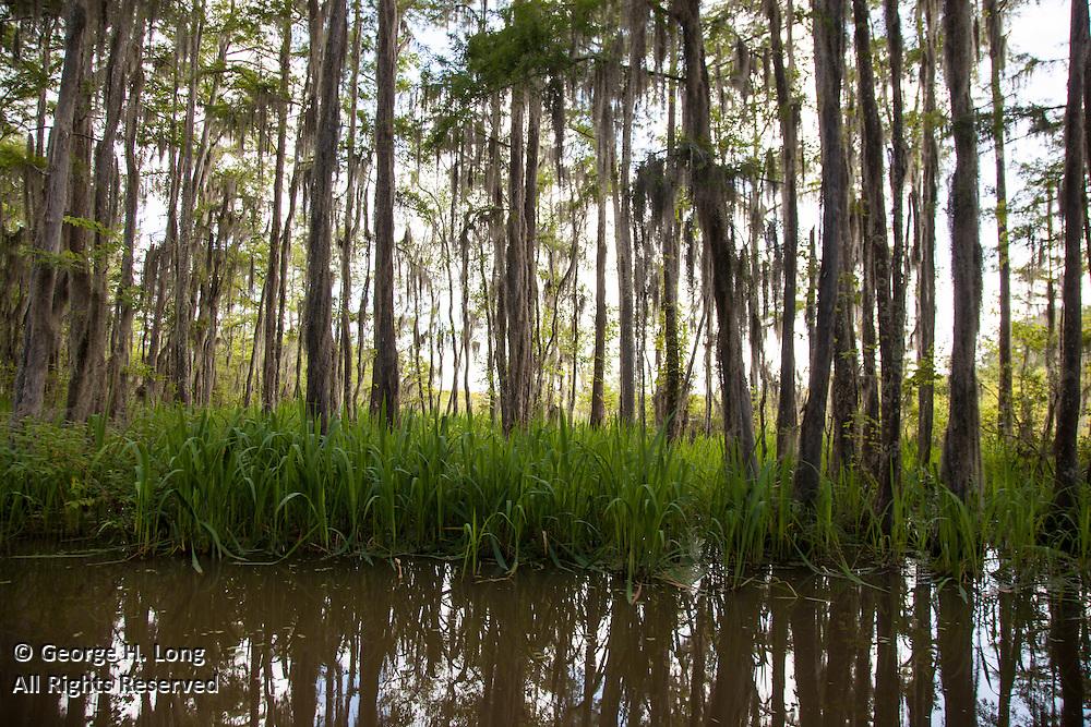 Honey Island Swamp