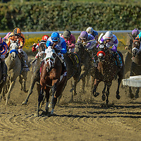 New Year's Day, ridden by Martin Garcia, and trained by Bob Baffert  wins the Breeders' Cup Juvenile (G1) on November 2, 2013 at Santa Anita Park in Arcadia, California during the 30th running of the Breeders' Cup.