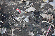 A used baby bottle nipple lies on the ground in an urban slum in Paranaque City, Metro Manila, The Philippines on 18 January 2013. Photo by Suzanne Lee for Save the Children UK