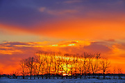 Trees at sunrise on the prairie<br /> Altona<br /> Manitoba<br /> Canada