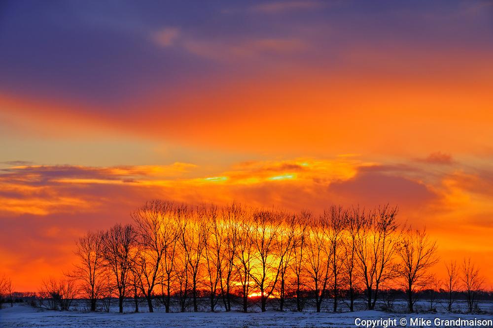Trees at sunrise on the prairie<br /> Altona<br /> Manitoba<br /> Canada