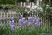 Spring stock photos. The Bryan House Garden.