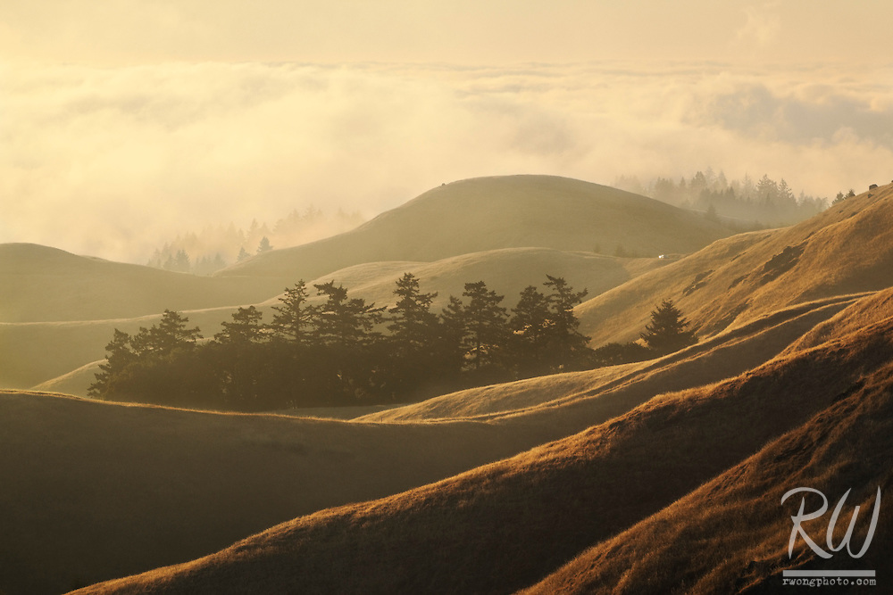 Summer Fog Rolling into Bolinas Ridge at Sunset, Mount Tamalpais State Park, California