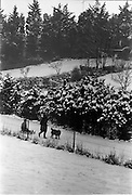 13/01/1963<br /> 01/13/1963<br /> 13 January 1963<br /> Snow scenes from Kiliney and Dun Laoghaire, Co. Dublin. Children with sled and dog.