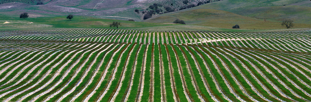 New growth highlights a vineyard in Monterey County, California