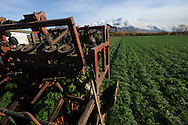 Farm machinery pulls carrots from the ground in a Vanderweele Farm field near Palmer, Alaska.