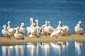 Other Pelicaniformes