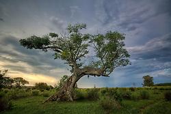 Árvore torta pelo vento no meio das coxilhas de Encruzilhada do Sul. FOTO: Jefferson Bernardes/Preview.com