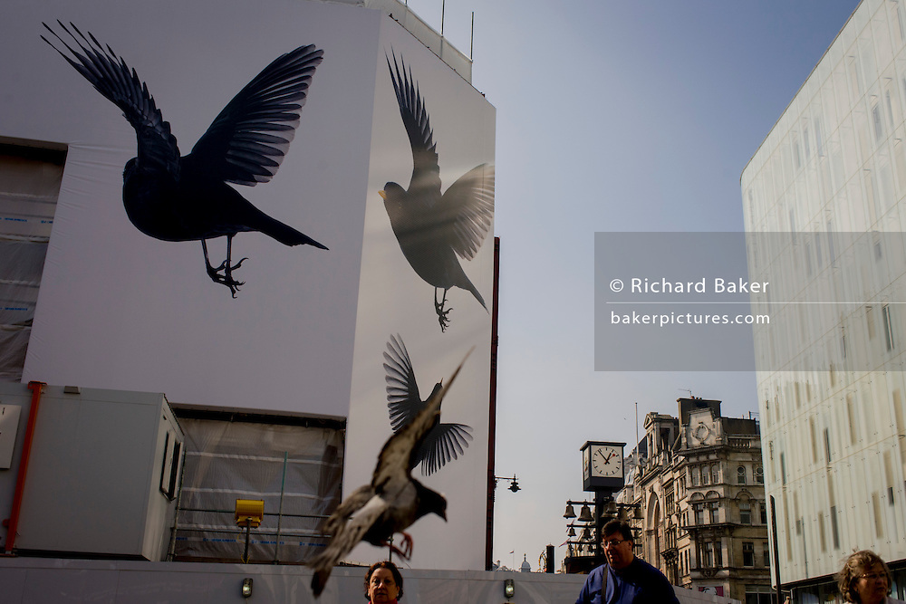 Bird theme construction theme hoarding in central London.