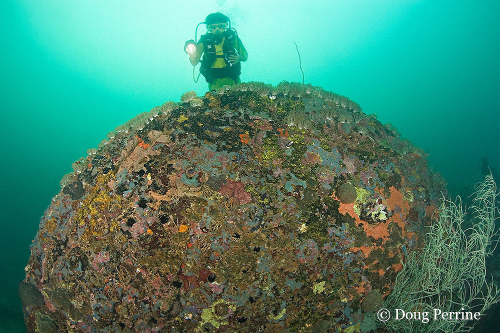 diver examines boiler of the wreck of the San Quentin or San Quintin, a Spanish gunboat sunk in 1898 during the Spanish-American War between Grande and Chiquita Islands at the entrance to Subic Bay, Philippines; wreckage is scattered over a reef at a depth of 9-18 m<br /> MR 379