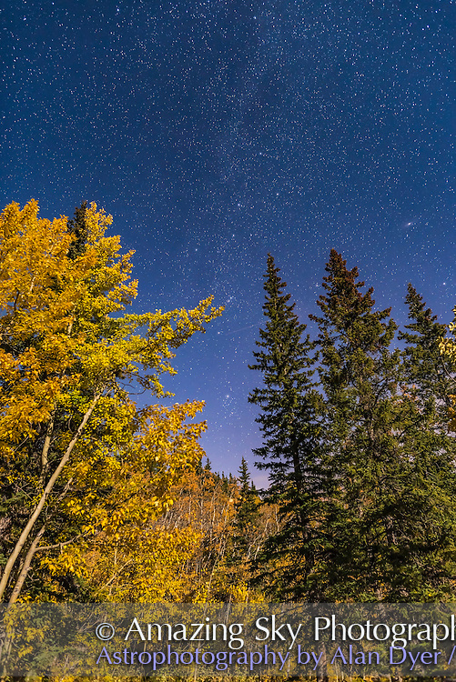 The autumn constellations of Cassiopeia and Perseus above goldern aspen trees on a moonlit autumn night, with the Andromeda Galaxy at right. I shot this, along with many other shots on this superb night, at the Elbow Falls area in Kananaskis area, Alberta.<br /> <br /> This is a single 20-second exposure with the 24mm lens at f/2.5 and Nikon D750 at ISO 1000.