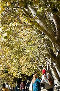 Students walking along pathway under fall (autumn) leaves at Macquarie University, Sydney, Australia