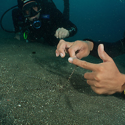 Dive Spot: Happy Ending