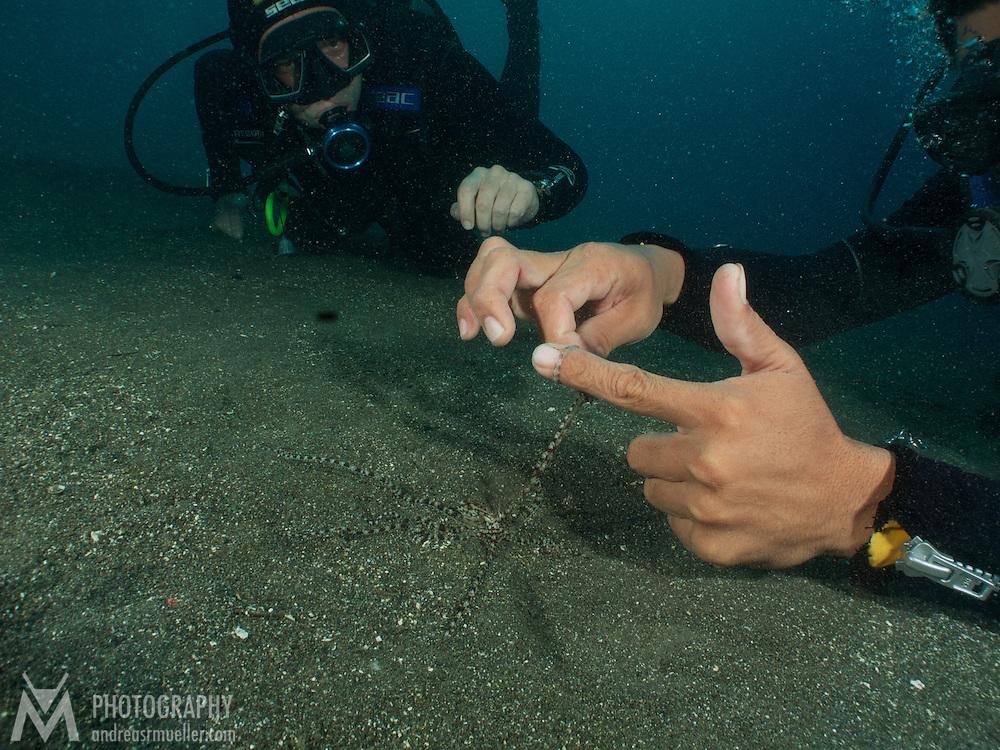 Dive Spot: Happy Ending