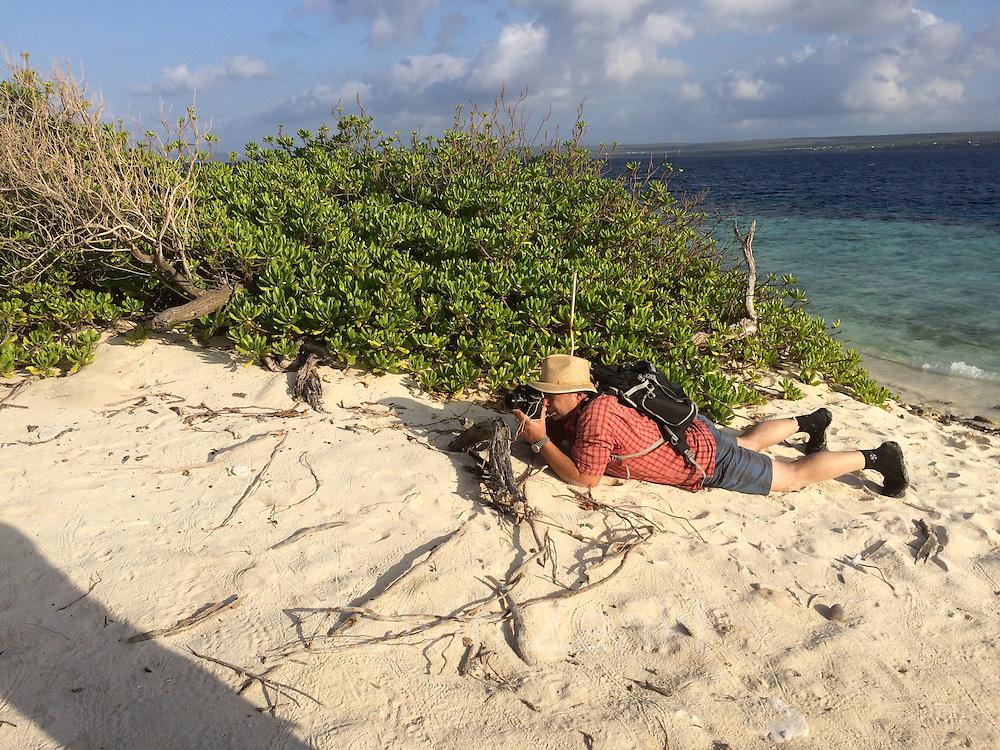 GEO Fotograf Solvin Zankl auf Augenhöhe mit den frisch geschlüpften Schildkröten auf Klein Bonaire.
