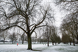 Windsor, UK. 1st February, 2019. An overnight snowfall alongside the Long Walk in Windsor Great Park. More snow is expected to fall during the morning in Berkshire and scores of schools will remain closed for the day.
