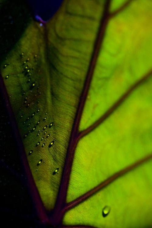 Brumadinho _ MG, Brasil...Museu de Arte Contemporanea de Inhotim (CACI). Na Foto detalhe de uma folhagem...The Inhotim Contemporary Art Museum (CACI). In this photo, detail of a foliage...Foto: JOAO MARCOS ROSA / NITRO