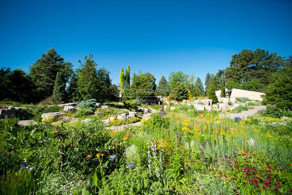 Rock Alpine Garden
