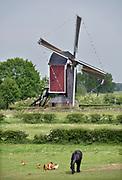 Nederland, Nederasselt, 12-5-2018Open molendag bij de gerestaureerde Maasmolen. Foto: Flip Franssen