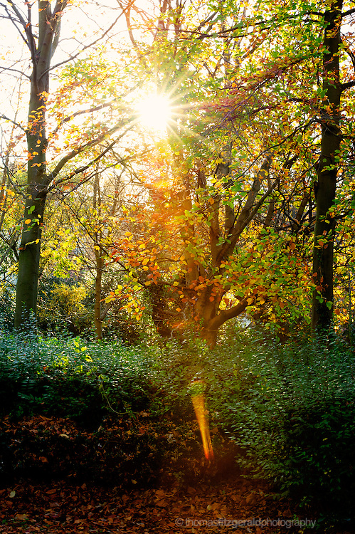 The sun shines brightly throught the multicoloured leaves of trees in this Autumn scene.