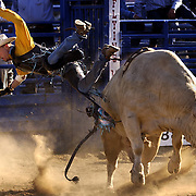 John Giannopulos, Ahwahnee, California falls off his ride during the Bull Riding competion at the Auburn Wild West Stampede on Saturday April 19, 2003 in Auburn, California