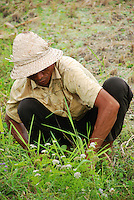 Close-up of a typical Balinese farmer working in his field.