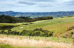 Green, rolling farmland dotted with oaks stretches inland from the Dunedin Area on the Otago Peninsula on New Zealand's south island.
