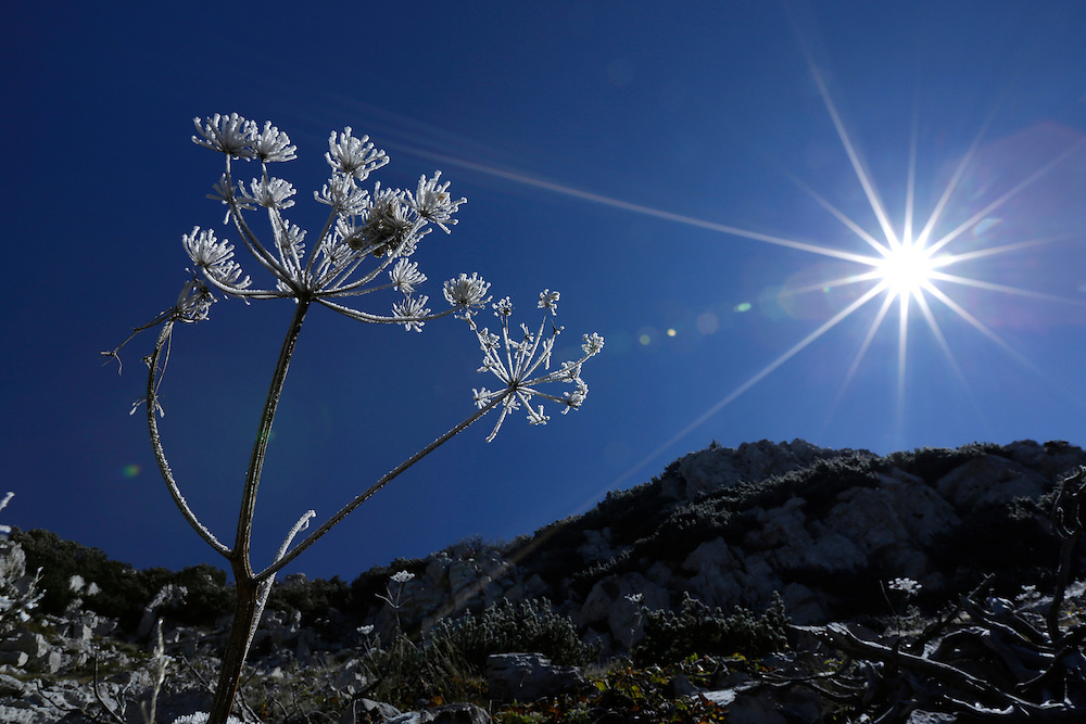 Frost on plants created by conditions of cold wind, Dinara mountain, <br /> Croatia.