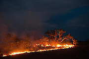 Savannah Fire<br /> Kanuku Mountains<br /> Rupununi<br /> GUYANA<br /> South America