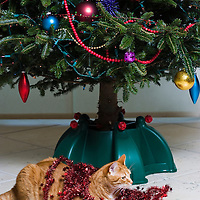 Cat under christmas Tree, close up
