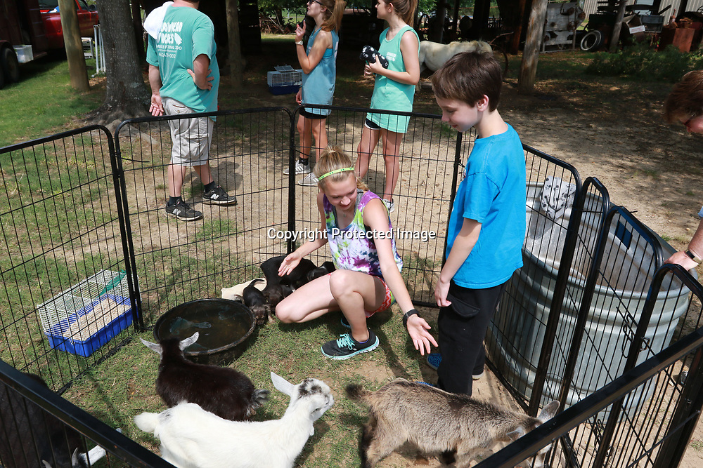 LIBBY EZELL | BUY AT PHOTOS.DJOURNAL.COM<br /> Avery Hendon, 12 right, and her brother Grayson, 9, have fun at the petting zoo Saturday at the Arc in the Park event at the Oren Dunn Museum