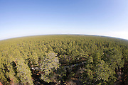 Pine Barrens from Apple Pie Hill; NJ. Pinelands