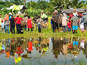 09 OCTOBER 2016 - JEMBRANA, BALI, INDONESIA:  Spectators reflected in a puddle watch a makepung (buffalo race) in Tuwed, Jembrana, Bali. Makepung is buffalo racing in the district of Jembrana, on the west end of Bali. The Makepung season starts in July and ends in November. A man sitting in a small cart drives a pair of buffalo bulls around a track cut through rice fields in the district. It's a popular local past time that draws spectators from across western Bali.    PHOTO BY JACK KURTZ