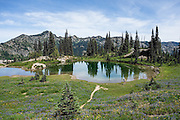 In Mount Rainier National Park, the Naches Peak Loop Trail is a 5 mile loop starting near Chinook Pass on Highway 410 between Enumclaw and Yakima, Washington, USA. This pond is along the Pacific Crest Trail portion of the loop on the east flank of Naches Peak.