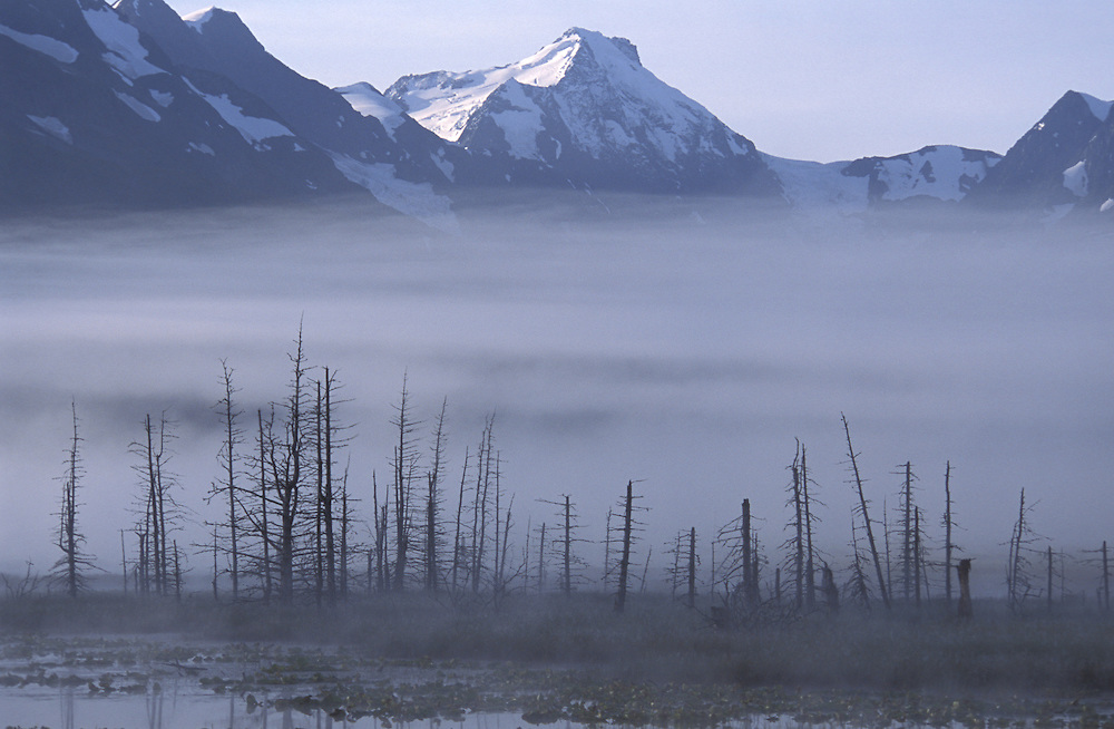 Morning Fog.Chugach Mts..Placer River Valley.Kenai Peninsula.Alaska.USA