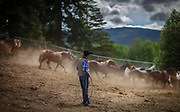 A cowboy rounds up the horses to be used in the day's rodeo events during the 101st Falkland Stampede in Falkland, BC (2019)