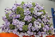 Mauve Flower Bouquet