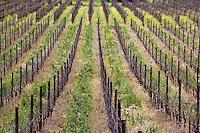 Silverado Trail Vineyard in Winter, Napa Valley, California