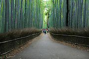 bamboo lined path Japan, Honshu, Sagano, Arashiyama