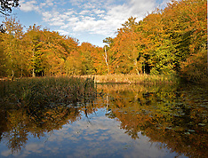 OCT 20 2014 Burnham Beeches ahead of the remnants of Hurricane Gonzalo