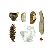 Clear blue sky, hot sun, and cool lake water: a wonderful day to live in Maine. <br /> <br /> Polypore tree fungus (Piptoporus betulinus), pine cone (Pinus sp.) freshwater mussels, birch bark (Betula payrifera) driftwood, stone.