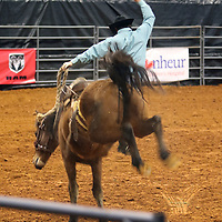 Libby Ezell | BUY AT PHOTOS.DJOURNAL.COM<br /> a competitor is thrown off during the Saddle Bronc Riding event